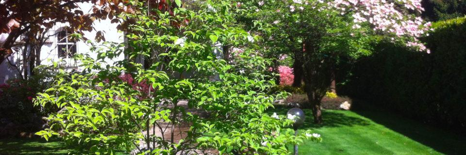 Curiamo il verde del tuo giardino per mantenerlo bello come il primo giorno