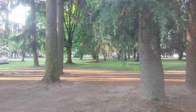 manutenzione-alberi-secolari-parco-pubblico-rovellasca